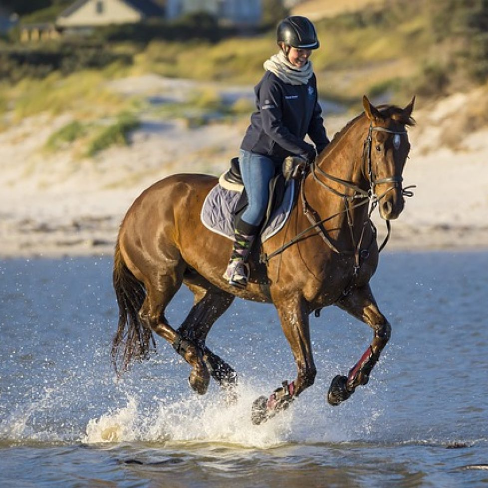 horse-4475581_640